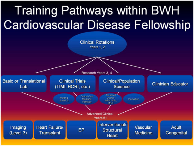 Training Pathways within BWH Cardiovascular Disease Fellowship